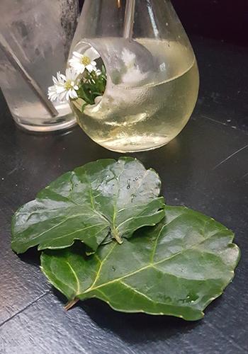 Botak Liquor's leafy coasters