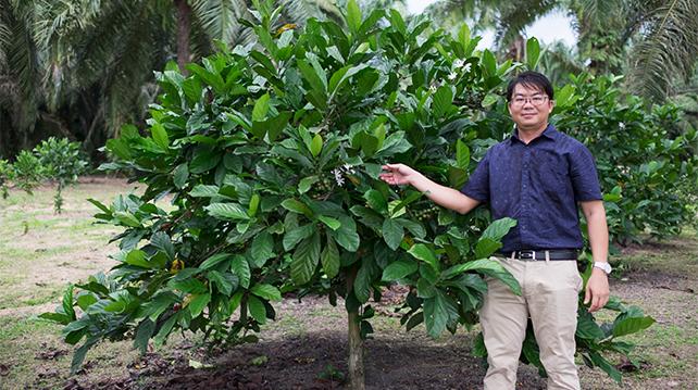 MyLiberica Farm founder Jason Liew